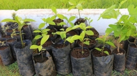 Lei prevê financiamento para arborização e recuperação de áreas degradadas
