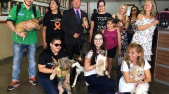 Vereador leva cães e gatos em posse na Câmara de Cuiabá